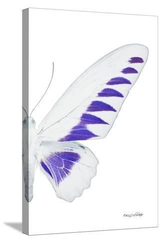 Miss Butterfly Brookiana - X-Ray Right White Edition-Philippe Hugonnard-Stretched Canvas Print