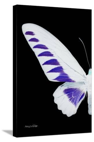 Miss Butterfly Brookiana - X-Ray Left Black Edition-Philippe Hugonnard-Stretched Canvas Print