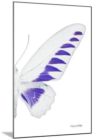 Miss Butterfly Brookiana - X-Ray Right White Edition-Philippe Hugonnard-Mounted Photographic Print