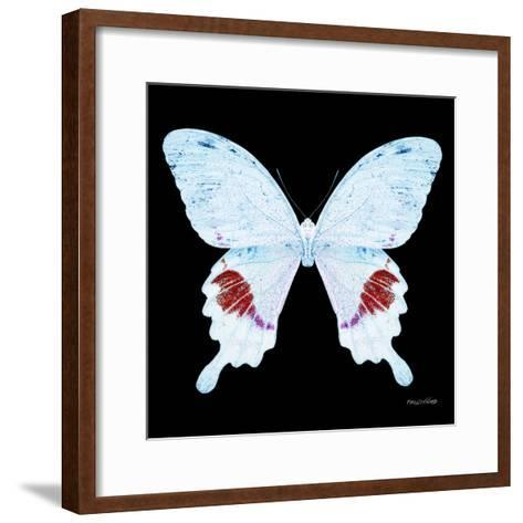 Miss Butterfly Hermosanus Sq - X-Ray Black Edition-Philippe Hugonnard-Framed Art Print