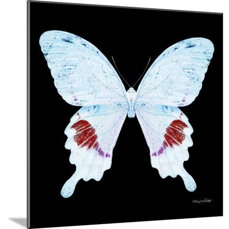 Miss Butterfly Hermosanus Sq - X-Ray Black Edition-Philippe Hugonnard-Mounted Photographic Print