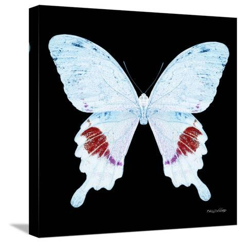 Miss Butterfly Hermosanus Sq - X-Ray Black Edition-Philippe Hugonnard-Stretched Canvas Print