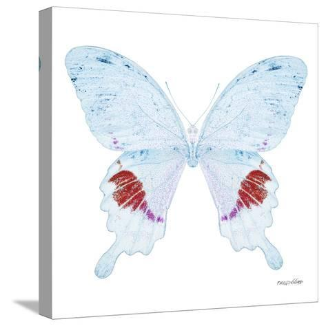 Miss Butterfly Hermosanus Sq - X-Ray White Edition-Philippe Hugonnard-Stretched Canvas Print