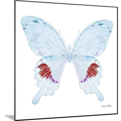 Miss Butterfly Hermosanus Sq - X-Ray White Edition-Philippe Hugonnard-Mounted Photographic Print