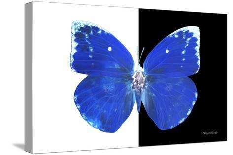 Miss Butterfly Catopsilia - X-Ray B&W Edition-Philippe Hugonnard-Stretched Canvas Print