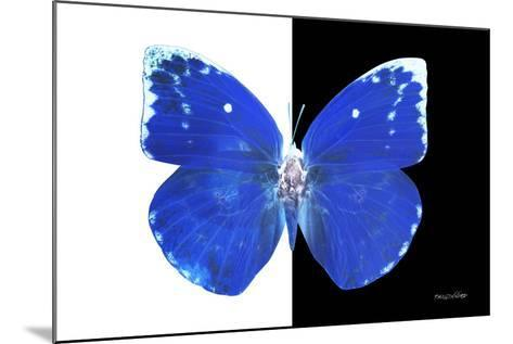Miss Butterfly Catopsilia - X-Ray B&W Edition-Philippe Hugonnard-Mounted Photographic Print