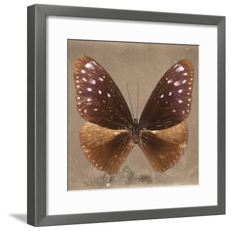 Miss Butterfly Euploea Sq - Caramel-Philippe Hugonnard-Framed Art Print