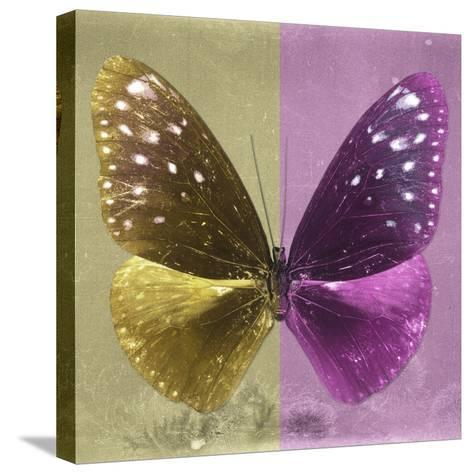 Miss Butterfly Euploea Sq - Gold & Hot Pink-Philippe Hugonnard-Stretched Canvas Print