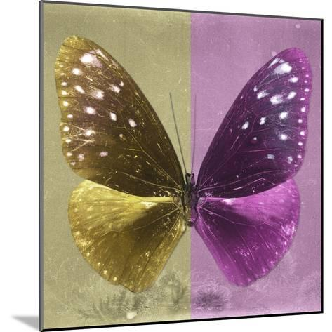 Miss Butterfly Euploea Sq - Gold & Hot Pink-Philippe Hugonnard-Mounted Photographic Print