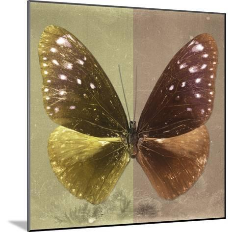Miss Butterfly Euploea Sq - Gold & Caramel-Philippe Hugonnard-Mounted Photographic Print