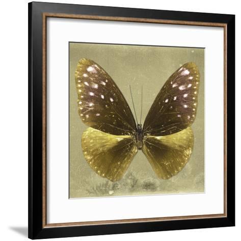 Miss Butterfly Euploea Sq - Gold-Philippe Hugonnard-Framed Art Print