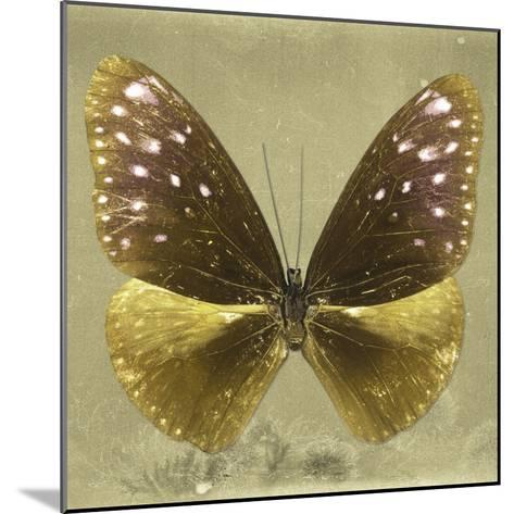 Miss Butterfly Euploea Sq - Gold-Philippe Hugonnard-Mounted Photographic Print
