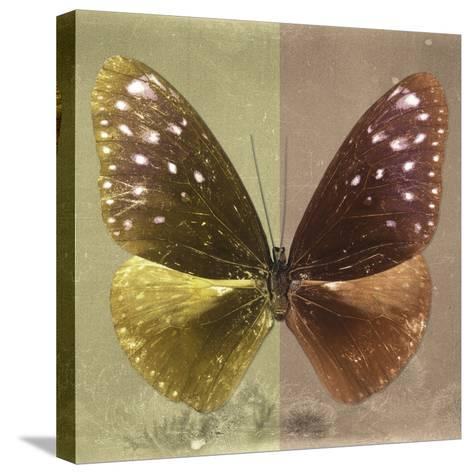 Miss Butterfly Euploea Sq - Gold & Caramel-Philippe Hugonnard-Stretched Canvas Print