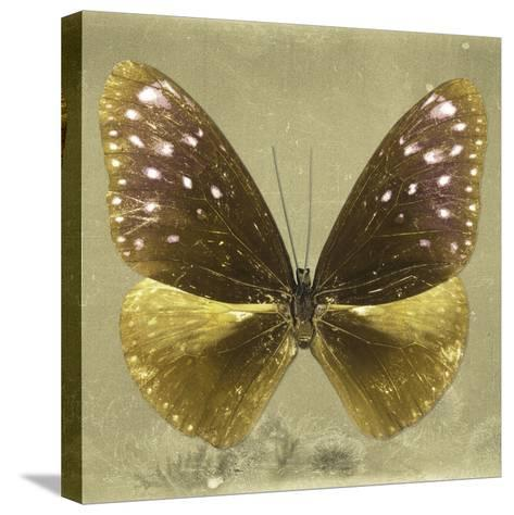 Miss Butterfly Euploea Sq - Gold-Philippe Hugonnard-Stretched Canvas Print