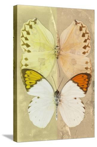 Miss Butterfly Duo Formoia - Yellow & Dark Yellow-Philippe Hugonnard-Stretched Canvas Print
