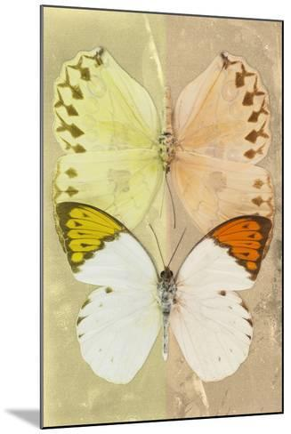 Miss Butterfly Duo Formoia - Yellow & Dark Yellow-Philippe Hugonnard-Mounted Photographic Print