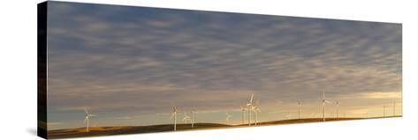 Sunset Light Shining On Wind Turbines Spinning In A Wheat Field-Greg Winston-Stretched Canvas Print