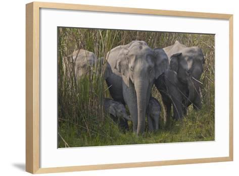An Indian Elephant Family In Kaziranga National Park-Steve Winter-Framed Art Print