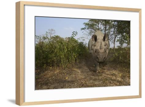A Remote Camera Captures A One-Horned Indian Rhinoceros-Steve Winter-Framed Art Print