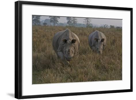 A Pair Of One-Horned Indian Rhinoceroses In Kaziranga National Park-Steve Winter-Framed Art Print