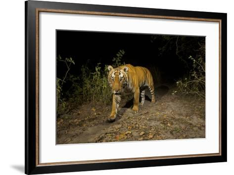 A Remote Camera Captures A Bengal Tiger In Kaziranga National Park-Steve Winter-Framed Art Print