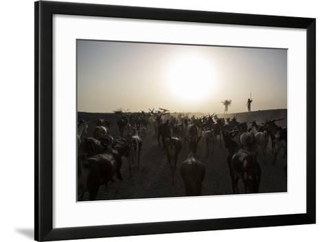 Herders Guide Their Goats Back To Haramfaf Bouri Village In The Afar Region Of Ethiopia-John Stanmeyer-Framed Art Print
