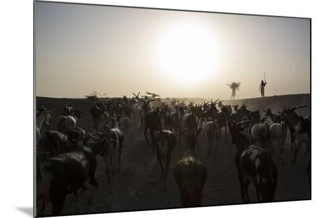 Herders Guide Their Goats Back To Haramfaf Bouri Village In The Afar Region Of Ethiopia-John Stanmeyer-Mounted Photographic Print