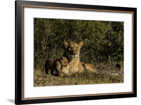 A Lioness, Panthera Leo, And Cub Resting In Botswana's Okavango Delta-Beverly Joubert-Framed Art Print