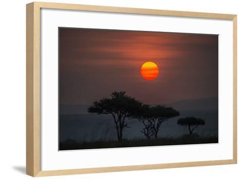 Acacia Trees Under The Setting Sun In Maasai Mara National Reserve-Andrew Coleman-Framed Art Print