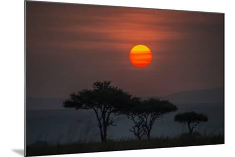 Acacia Trees Under The Setting Sun In Maasai Mara National Reserve-Andrew Coleman-Mounted Photographic Print
