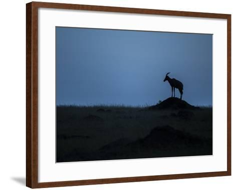 Silhouette Of An Antelope In Maasai Mara National Reserve-Andrew Coleman-Framed Art Print