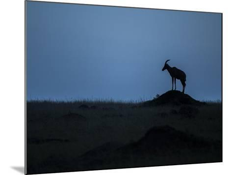 Silhouette Of An Antelope In Maasai Mara National Reserve-Andrew Coleman-Mounted Photographic Print