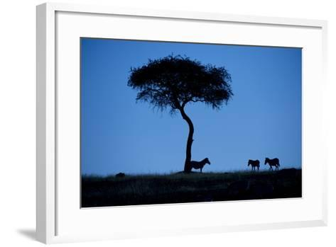 Silhouette Of Zebras, Equus Quagga, Standing By An Acacia Tree-Andrew Coleman-Framed Art Print