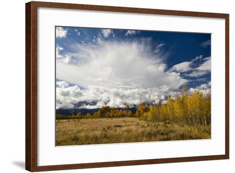 Fall Aspen Trees Decorating Jackson Hole, Grand Teton National Park, Wyoming-Mike Cavaroc-Framed Art Print