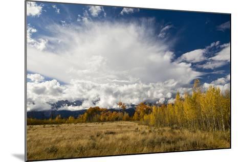 Fall Aspen Trees Decorating Jackson Hole, Grand Teton National Park, Wyoming-Mike Cavaroc-Mounted Photographic Print