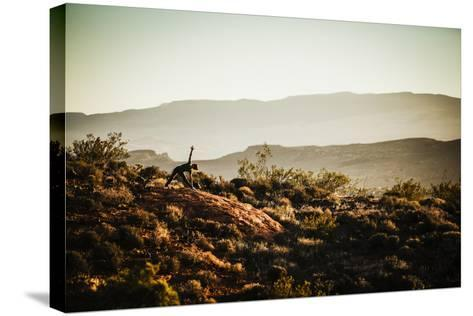 A Woman Practices Yoga In The Red Cliffs Desert Reserve, Saint George, Utah-Louis Arevalo-Stretched Canvas Print