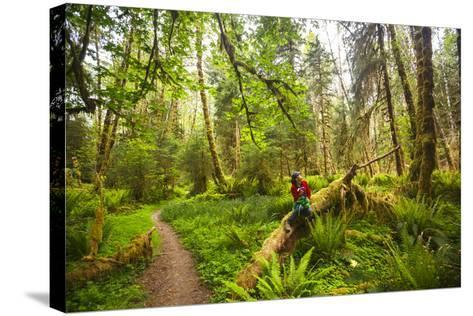 Woman Pauses For A Drink Of Water Along The Bogachiel Rain Forest Trail #825 In The Olympic NP-Ben Herndon-Stretched Canvas Print