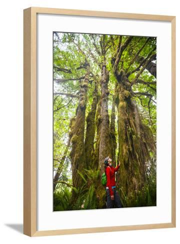 Woman Admires Massive, Ancient Maple Tree Along Bogachiel Rain Forest Trail #825 In The Olympic NP-Ben Herndon-Framed Art Print