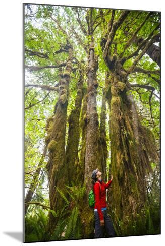 Woman Admires Massive, Ancient Maple Tree Along Bogachiel Rain Forest Trail #825 In The Olympic NP-Ben Herndon-Mounted Photographic Print