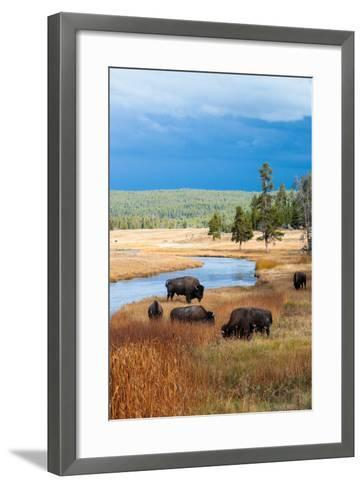 Bison Near Nez Perce Creek On A Stormy Day In Yellowstone National Park In Autumn-Ben Herndon-Framed Art Print