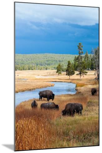 Bison Near Nez Perce Creek On A Stormy Day In Yellowstone National Park In Autumn-Ben Herndon-Mounted Photographic Print