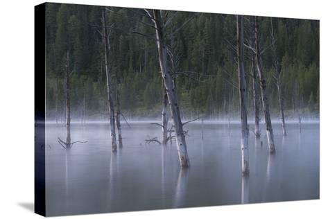 Early Morning Mist Rising Off Of Earthquake (Quake) Lake In SW Montana, Near West Yellowstone-Austin Cronnelly-Stretched Canvas Print