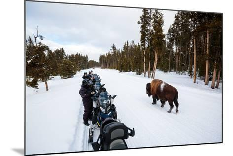 Tourists On A Snowmobile Tour In Yellowstone NP Take Smart Phone Photos If A Nearby Bison-Ben Herndon-Mounted Photographic Print