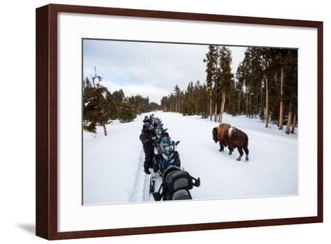 Tourists On A Snowmobile Tour In Yellowstone NP Take Smart Phone Photos If A Nearby Bison-Ben Herndon-Framed Art Print