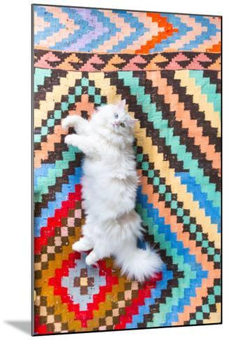 Ares, A Long Haired, White, Doll Face Persian Cat With Bi-Colored Eyes On A Colorful Rug-Ben Herndon-Mounted Photographic Print