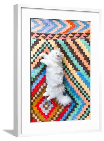 Ares, A Long Haired, White, Doll Face Persian Cat With Bi-Colored Eyes On A Colorful Rug-Ben Herndon-Framed Art Print