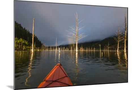 First Person POV Of Kayaking, Through The Trees Of Earthquake Lake In SW Montana, Near Yellowstone-Austin Cronnelly-Mounted Photographic Print