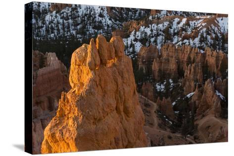 Early Sunrise Light Illuminating The Hoodoos Of Bryce Canyon, Bryce Canyon National Park, Utah-Mike Cavaroc-Stretched Canvas Print