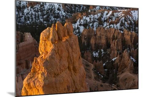 Early Sunrise Light Illuminating The Hoodoos Of Bryce Canyon, Bryce Canyon National Park, Utah-Mike Cavaroc-Mounted Photographic Print