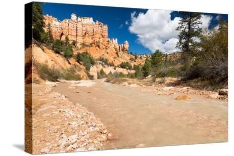 The Man-Made Creek Along The Mossy Cave Trail, Bryce Canyon National Park, Utah-Mike Cavaroc-Stretched Canvas Print